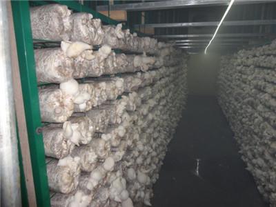贵阳蘑菇网片